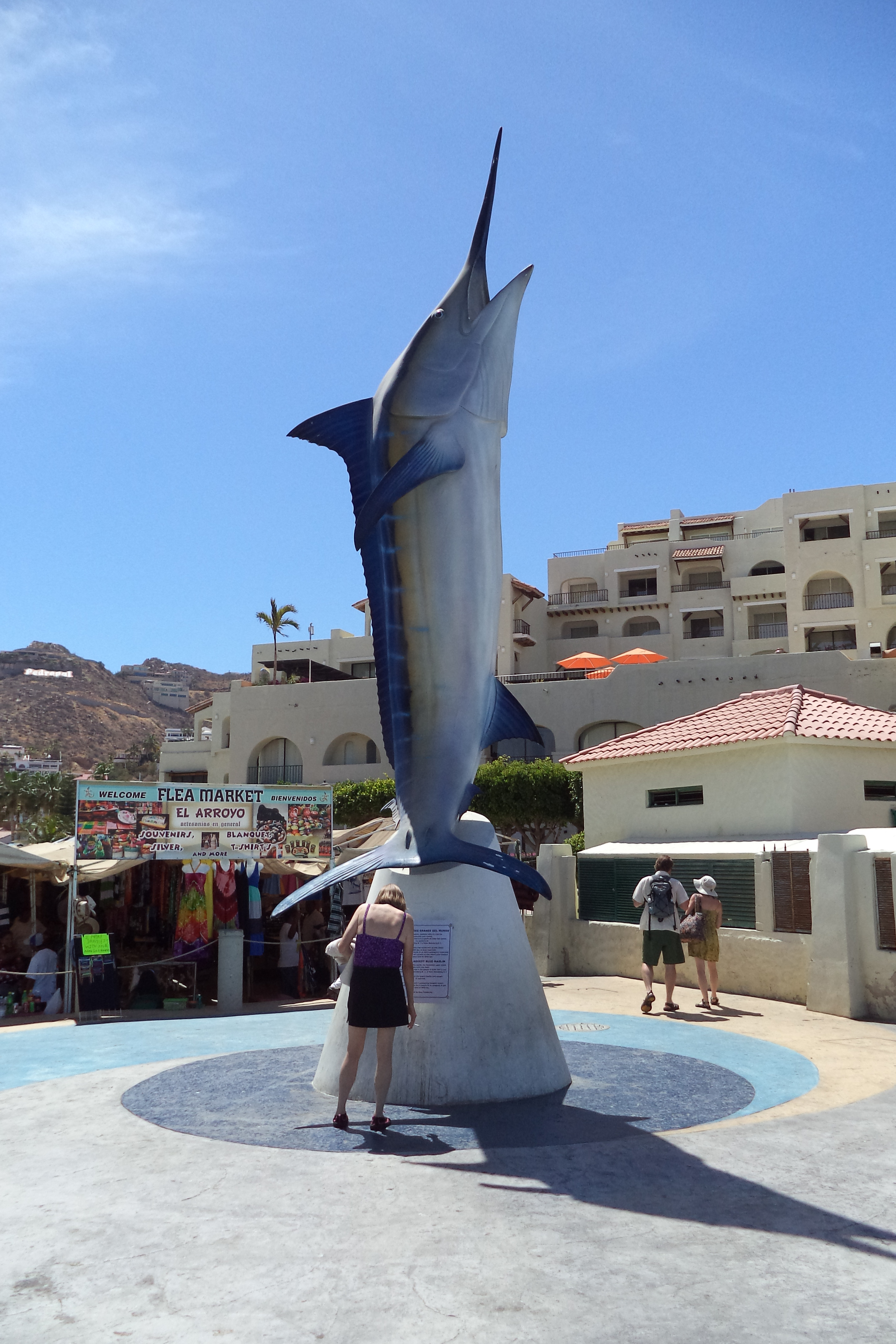 how to shore fish in cabo